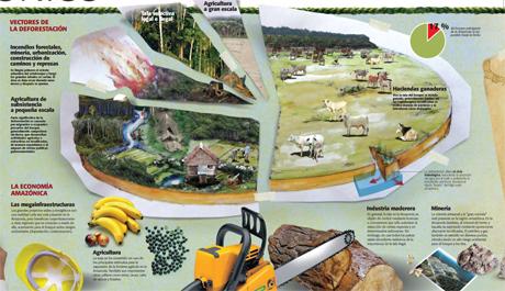 Bosques amazonicos -libro-