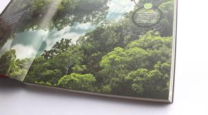 El Peru de los bosques 2
