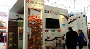 Stand cacao 2